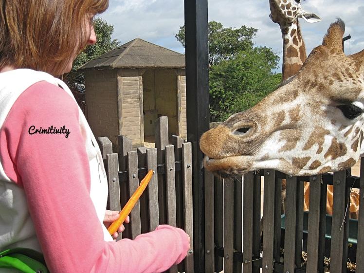 Crimitivity Animal Encouter Australie 1