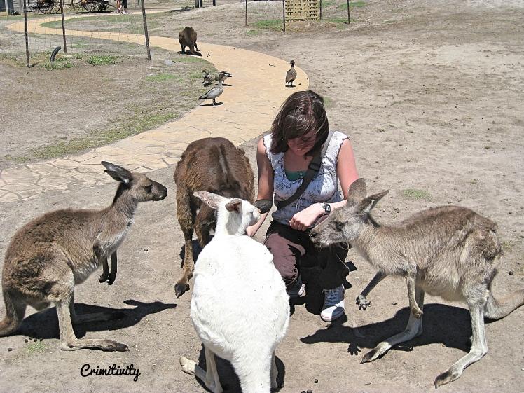 Crimitivity Animal Encouters 4