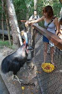 Crimitivity Animal Encouters Australie 10